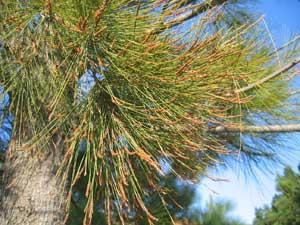 Pollen: When will I get Hay Fever in Australia? - Allergy