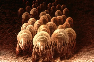 A Dust Mite Horde Infesting Carpet